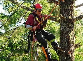 Scotty Mitchell is an ISA certified arborist