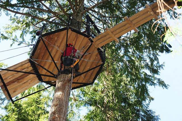 Rigging a platform in a tree. ScottyTree.com
