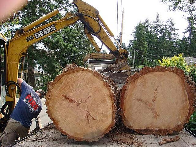 Tree Services Victoria BC