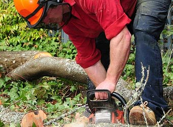 ChainSaw work | ScottyTree.com