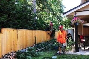 weather damaged trees