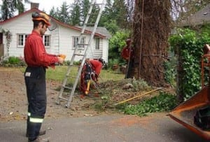 arborist assessing a tree and surrounding property